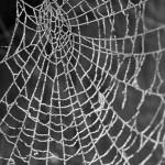 Spider web - Frame
