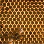 Beehive - Shell
